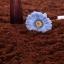 พรมปูพื้นสีกาแฟ thumbnail 5